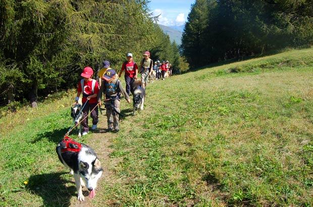 Cani rando : une marche qui a du chien