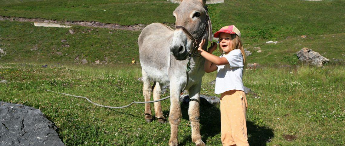 Randonnée avec animaux : 5 randos au poil !