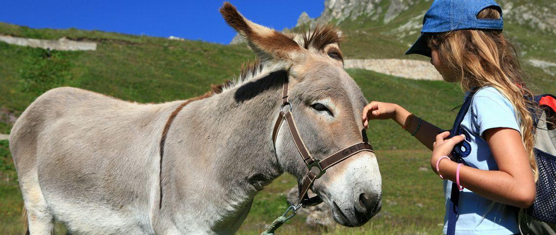 Fun hikes with donkeys and llamas!