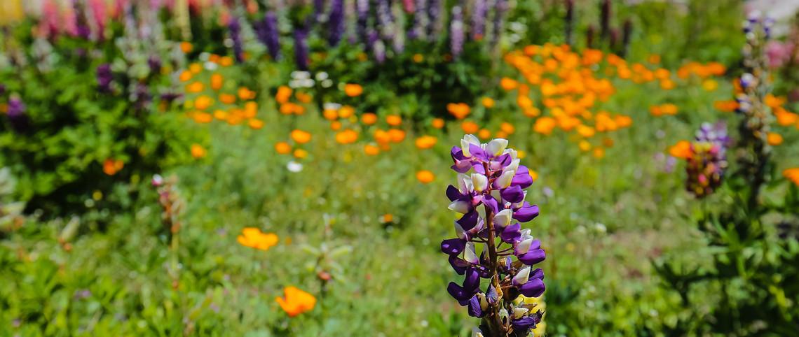 Portfolio : fleurs en couleur