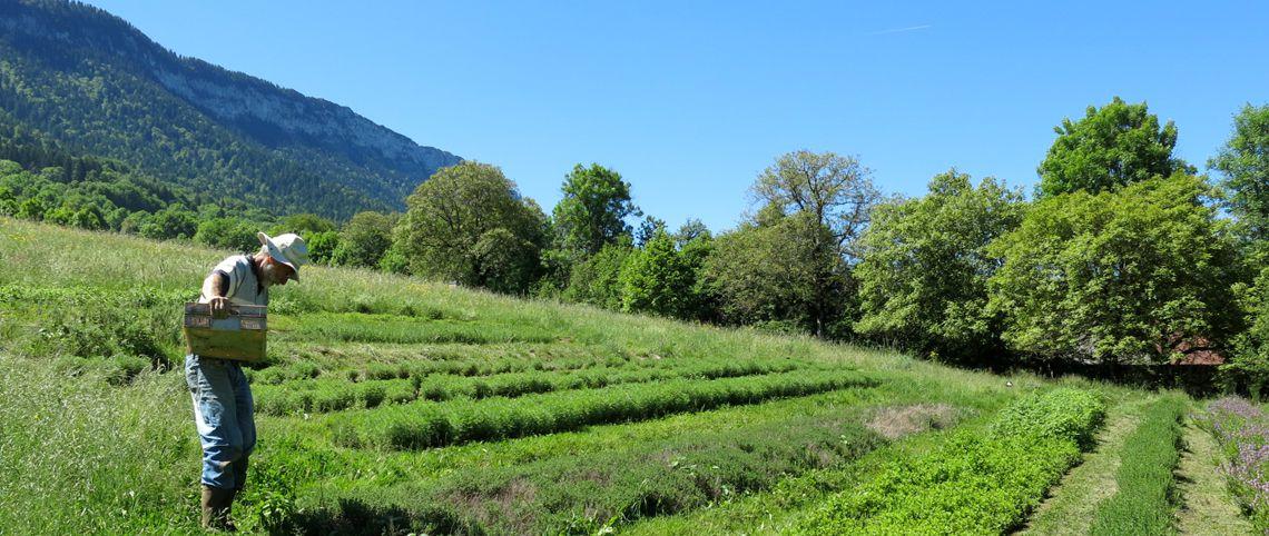 Bien-être et bienfaits des plantes de montagne