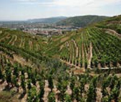 Mountain viticulture
