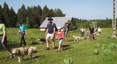 Cani-rando : une marche qui a du chien !